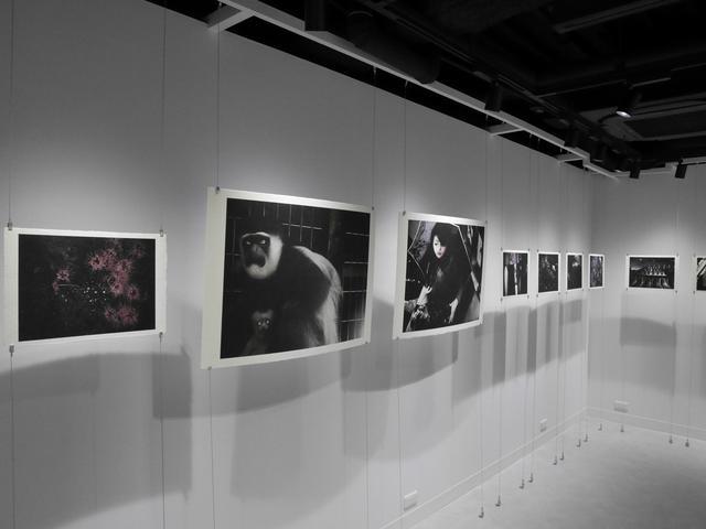 """画像2: 田川梨絵さんによる写真展「私の手の中に花を摘む」が東京・銀座"""" LUMIX GINZA TOKYO""""にて11月27日(水)まで開催中。"""