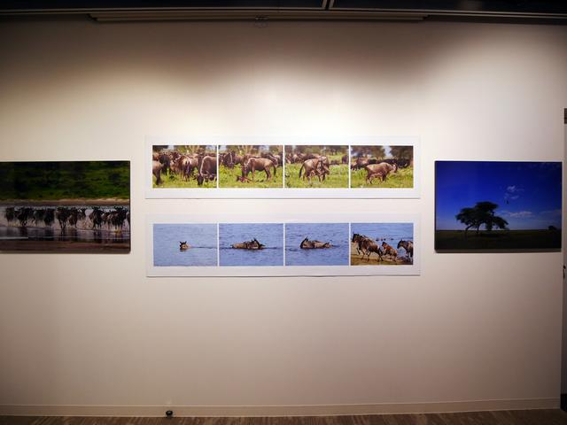 画像2: 金子裕昭 写真集発売記念写真展 「生きる強さ」Strength to Live - An African Savanna Storyは、本日11月20日(水)よりリコーイメージングスクエア新宿で 開催中!
