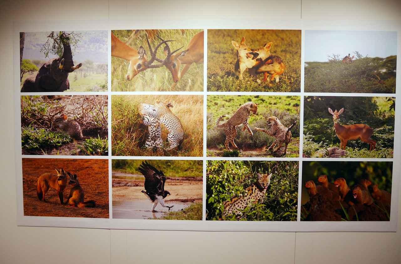 画像1: 金子裕昭 写真集発売記念写真展 「生きる強さ」Strength to Live - An African Savanna Storyは、本日11月20日(水)よりリコーイメージングスクエア新宿で 開催中!