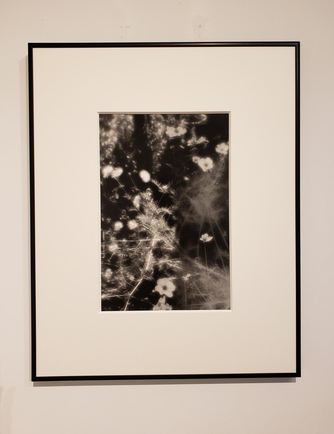 画像: 展示作品より。 会場では、平林達也さんの写真集「白い花 White Flowers」(UI出版/2018年)やポストカードなども販売中です。