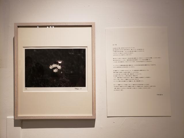 画像: 入口には、平林さんが2004年頃から白い花を撮るきっかけとなった花の写真と、本展に寄せたテキストが展示されています。