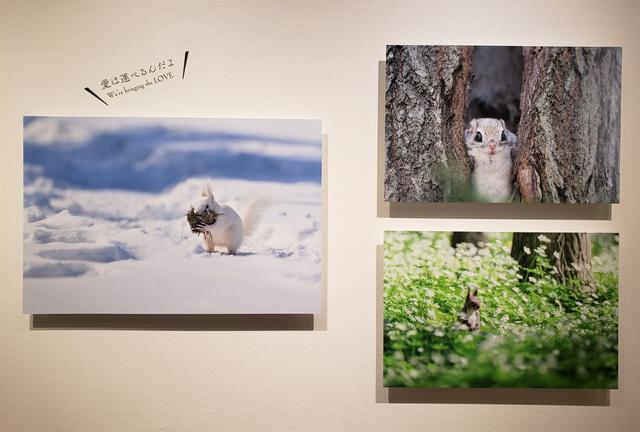画像: 展示作品より。原田さんが撮影したリスの仕草や表情を見ているだけで、自然に笑みがこぼれ、心がほっと癒されます。