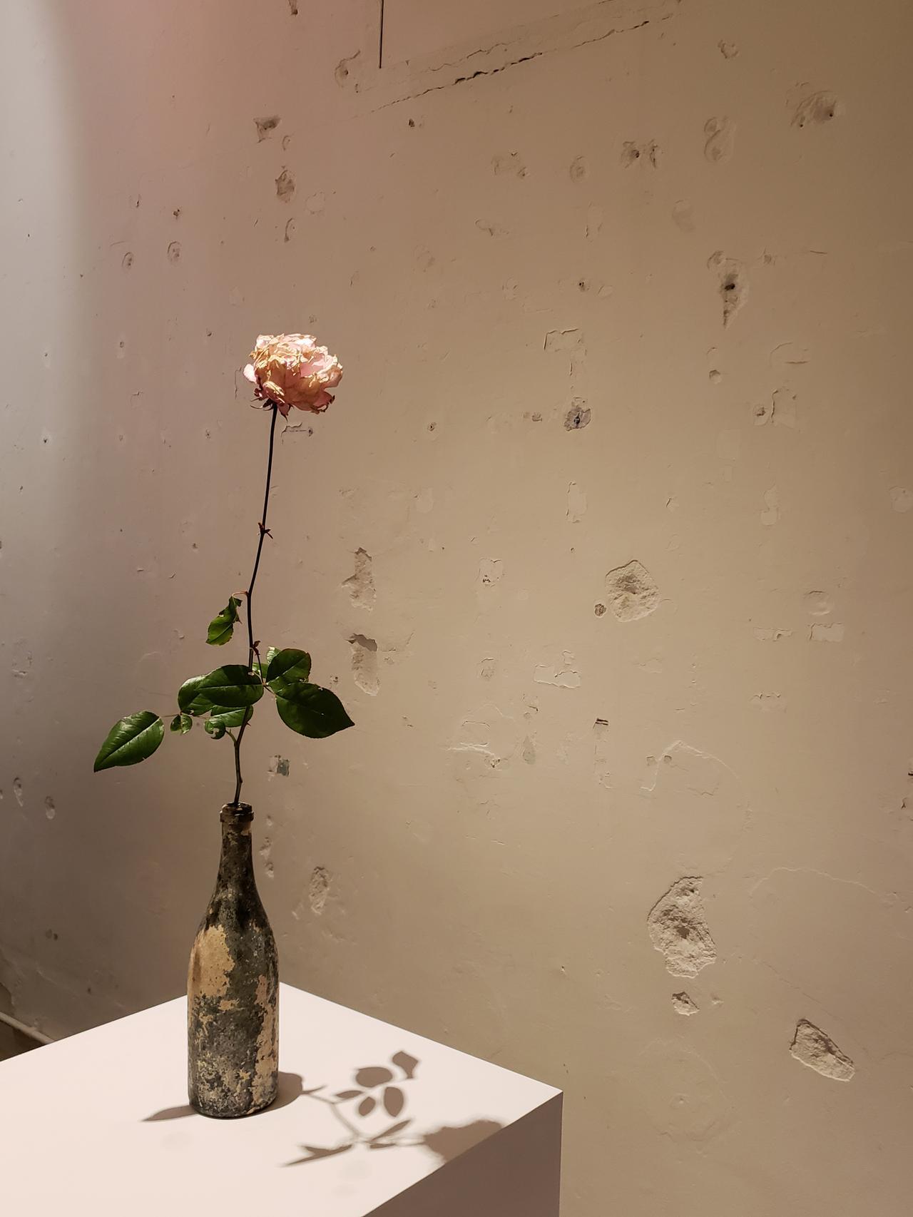 画像: オランダの運河で見つかったというワインボトルに生けられたバラの花。 本発表会のために、杉さんが、都内に咲くバラを探し歩き、やっと見つけたという一輪の花。霜で凍り、枯れはじめたバラの凛とした美しい佇まいには、ただ目を奪われるばかり。