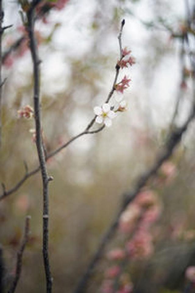 画像: 日本では数少ないアート写真専門ギャラリー「ブリッツ・ギャラリー」のギャラリスト福川芳郎さんによるブログ「The Short Epic」。 アート写真の海外オークション市場の動向分析、写真展・写真集のレビュー、日本における新たな写真の価値基準の提言などを中心に掲載されています。