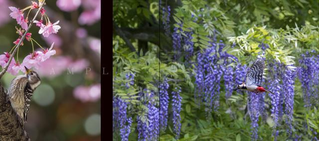 画像3: 野鳥写真家・水中伸浩さんの初写真集「Art of Wildbird」が 好評発売中!