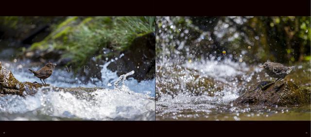 画像2: 野鳥写真家・水中伸浩さんの初写真集「Art of Wildbird」が 好評発売中!