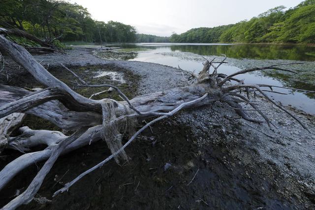 画像: 作例003「輪廻」6月上旬 苫小牧口無沼 ▲干上がった沼から白骨のような枯れ木が現れ、新緑になった背景との対比が面白い。 ■キヤノンEOS R EF11-24mmF4L USM(11mmで撮影) 絞り優先AE(F22・1/60秒) マイナス0.7露出補正 WB:太陽光 ISO1600 ディテール重視 手持ち撮影