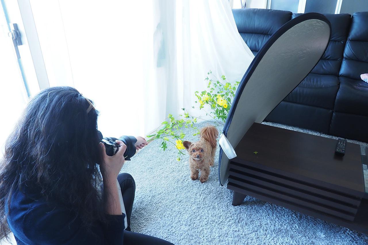 画像: ▲レースカーテンをディフューザー代わりに使い、柔らかな光を演出。レフ板で影を和らげ、ふんわりとした印象に仕上げた。犬とコミュニケーションをとりながら撮影するので、軽くて持ちやすいミラーレス一眼レフを使用。筆手前の花はあえて手持ちにして映り込む分量を調節し、犬の動きや表情に合わせて撮影した。