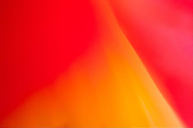 画像: 超接写でイメージの世界へ」 ▲花を撮っていると、どうしてもワンパターンになりがち。そんなときは思い切って発想を変えてみるといい。オススメは超接写。マクロレンズでもたかだか等倍で、眼の延長上。なので、接写リングを使って、等倍越えの世界を体験してみたい。とくに、ワイド系レンズや大口径レンズと接写リングを組み合わせると、まさにレンズを通してでなければ楽しめない、写真ならではの甘美な描写を楽しむことだってできる。とはいえ、最初は失敗の山になるので、とにかく枚数撮って、あとから選ぶつもりで頑張ろう! ■パナソニック GX-7 MK2 LUMIX G 14mm F2.5 絞りF2.5   1/8秒 ISO1600