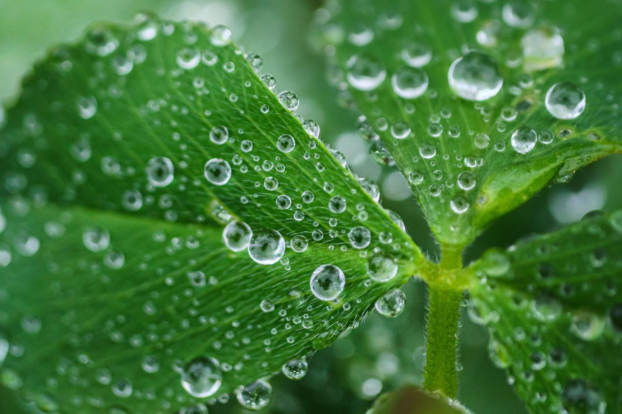 画像: 「水滴で楽しむ」 ▲雨の日でも、玄関先なら気軽に撮影できる。やっぱり、水滴+植物はほんとうにフォトジェニック。もちろん、日々、水をあげるときに撮ってもいいけれど、やっぱり自然の雨が一番ステキ。そんな絶好のチャンスを捉えやすいのも、家撮りの最大のメリットかも。 ■パナソニック G9 LEICA DG MACRO-ELMARIT 45mm F2.8 絞りF2.8   1/500秒 ISO800