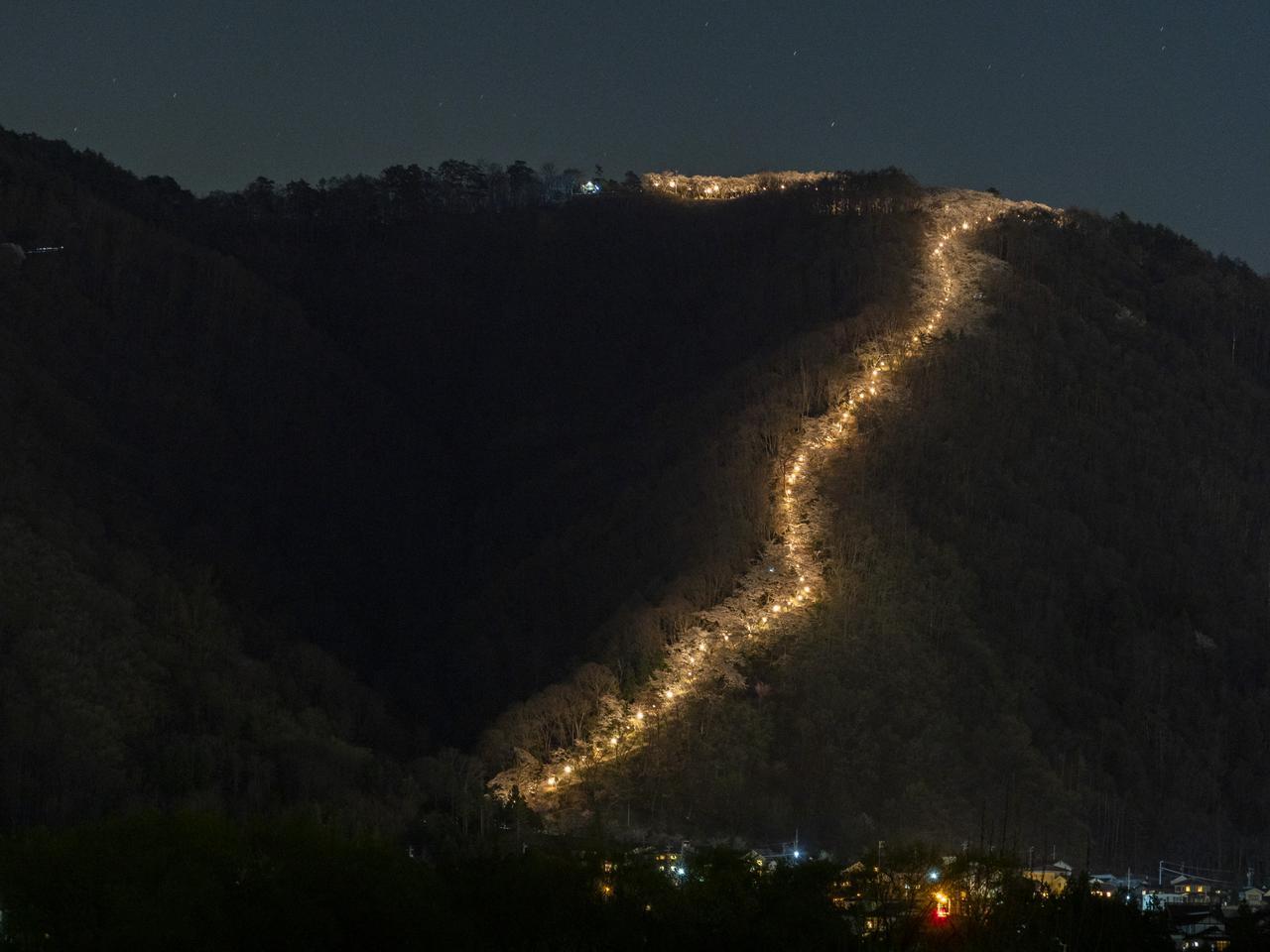 画像: ライトアップされた光城山の桜
