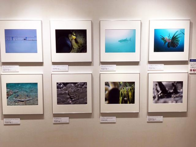 画像1: オリンパス水中写真展「WONDERFUL OCEAN WORLD」は、4人の水中写真家の競演で現在好評開催中です。