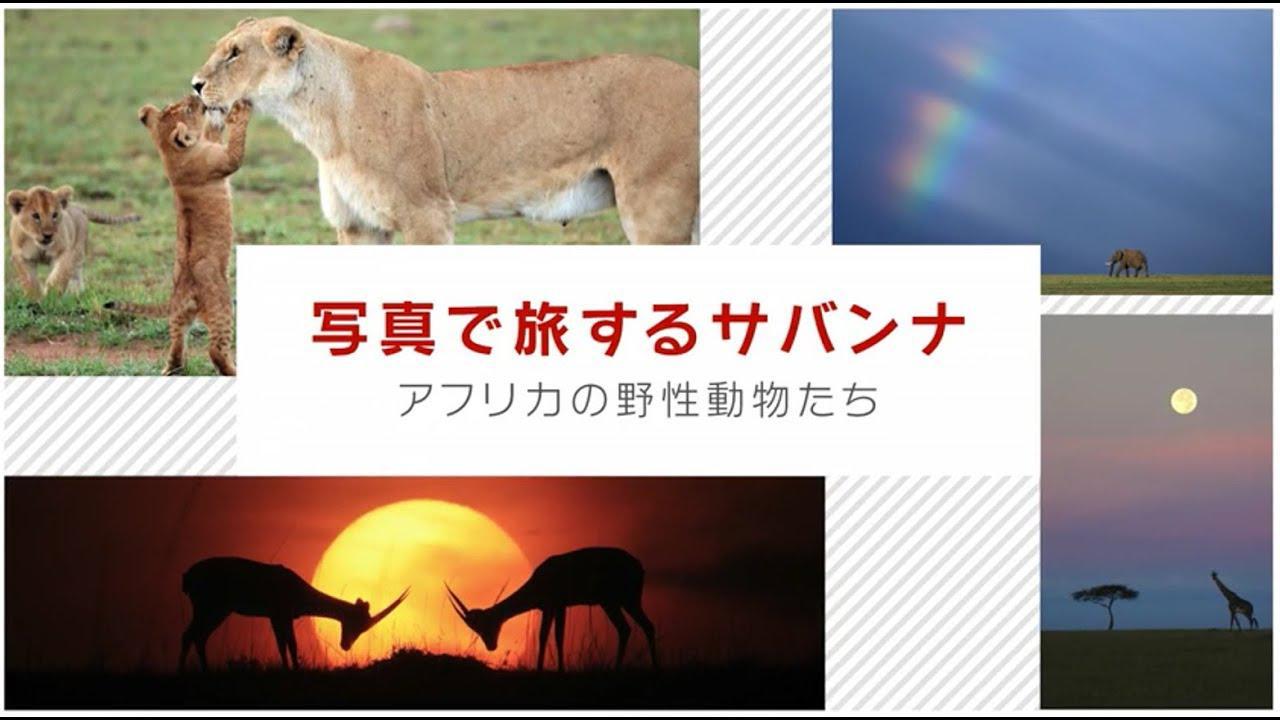 画像: 写真で旅するサバンナ アフリカの野生動物たち 講師:井村淳【キヤノン公式】 youtu.be