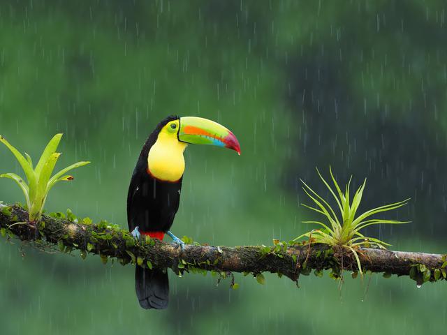 画像: ▲中野さんの写真展「OM-Dと旅する世界の野鳥」、展示作品より。