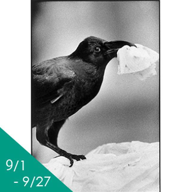 画像: 日本カメラ博物館 JCII Camera Museum:清水哲朗作品展 「トウキョウカラス」