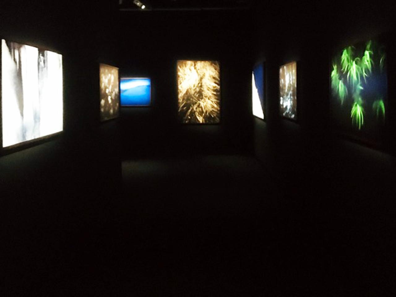 画像1: 中西敏貴写真展『Kamuy』。北海道美瑛町で大自然と向き合いながら、アイヌの人々の自然観に人と自然との関わりの答えを探し求めてきた中西氏。