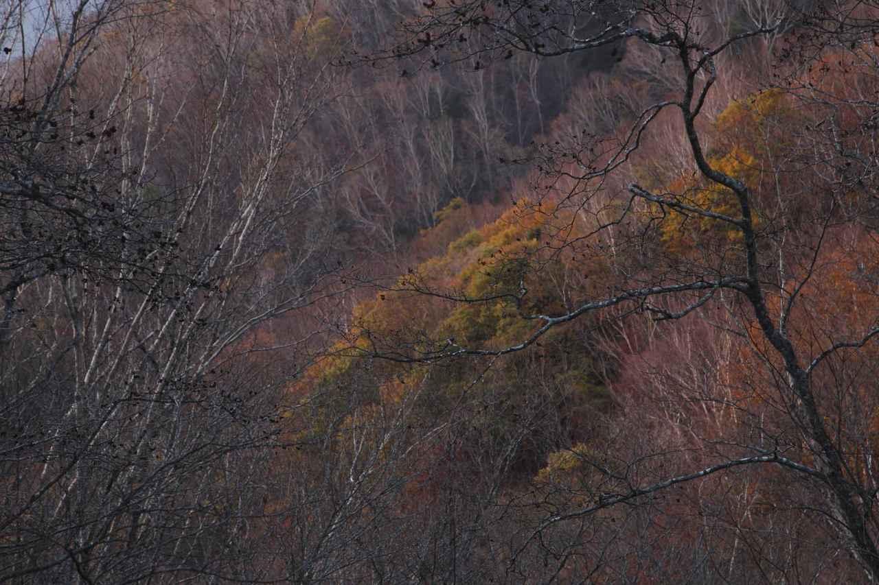 画像: 展示作品より©白井厚