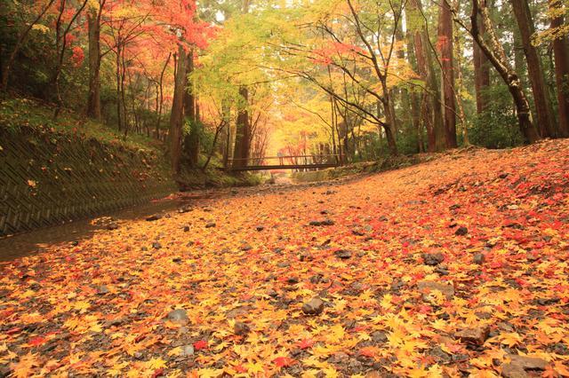 画像: ▲第17回写真コンテスト最優秀賞「落葉の宮川」。錦おりなす宮川のほとり、秋色のグラデーションは息を呑む美しさ。