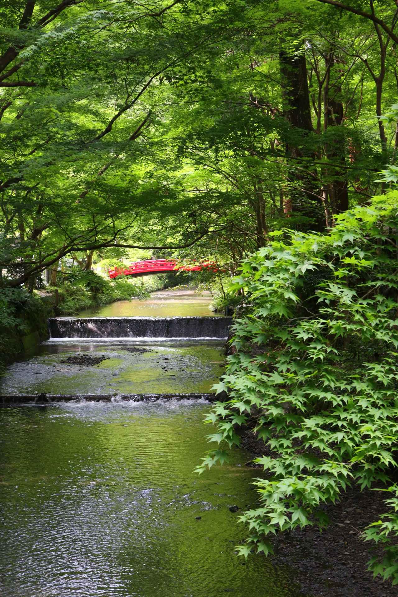 画像: ▲宮川の新緑を望む。ご神域を流れる清流(宮川)に映り込む青葉モミジが眩い。