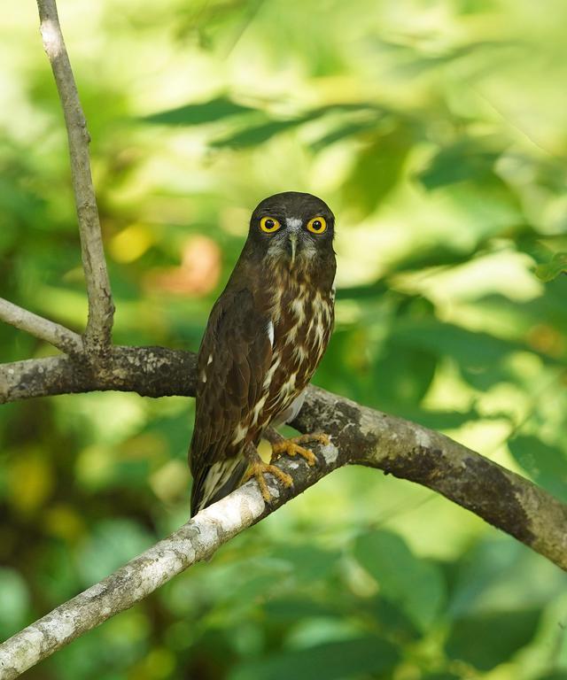 画像: ▲第18回写真コンテスト入選作品「青葉の守り人(アオバスク)」。境内には約30種の野鳥が生息している。信仰を通して護り伝えられてきた神聖な森が広がる。