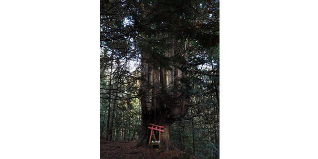 画像: 2020年10月9日~10月21日 清水 哲朗 写真展「おたまじゃくし ―Genetic Memory―」|オリンパスプラザ東京 写真展:オリンパスギャラリー東京|ショールーム/写真教室|オリンパス