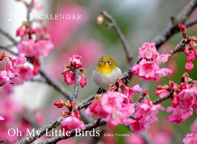 画像: カメラマン 2021カレンダーシリーズ 19 戸塚学 「Oh My Little Birds」-モーターマガジン Web Shop