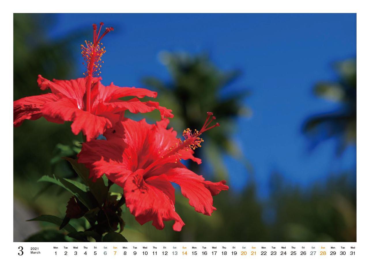 Images : 4番目の画像 - カメラマン2021カレンダー、斎藤勝則「TAHITIAN Sea Breeze」 - Webカメラマン