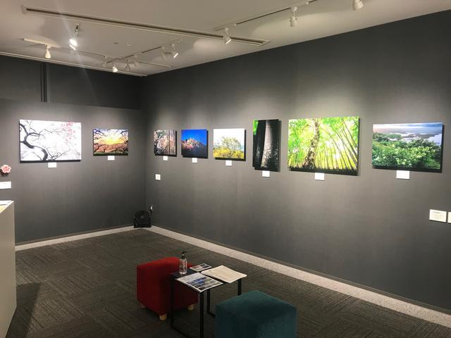 画像: ▲A1(全倍)10点、A2(全紙)29点の作品がスペース1、スペース3で展示されています。