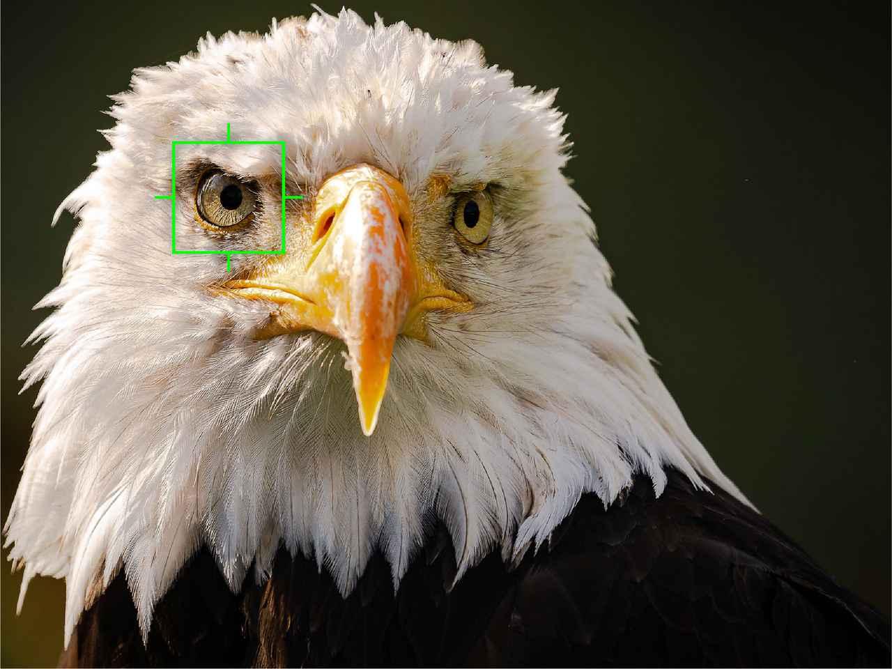 画像: 鳥認識で鳥の瞳を検出し、追尾する。