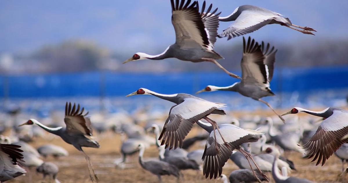 画像: 鹿児島県出水市の観光情報満載のポータルサイト