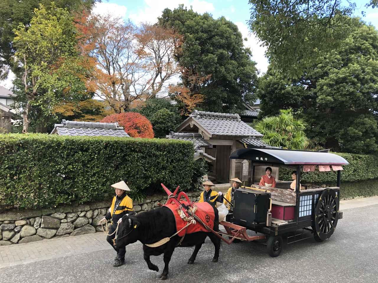 画像: ▲観光牛車に揺られ、日本遺産認定の出水麓を散策できる。 www.izumi-navi.jp
