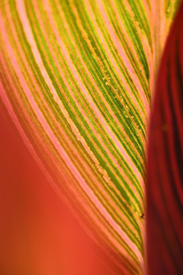 画像: 良く分からないけど葉っぱの裏。絞るか悩んで開け気味にしてパチリ。シャープさと柔らかさが両立した写りに悶絶です。 ■絞り優先AE(F5.6 1/200秒) プラス2.3露出補正 ISO320