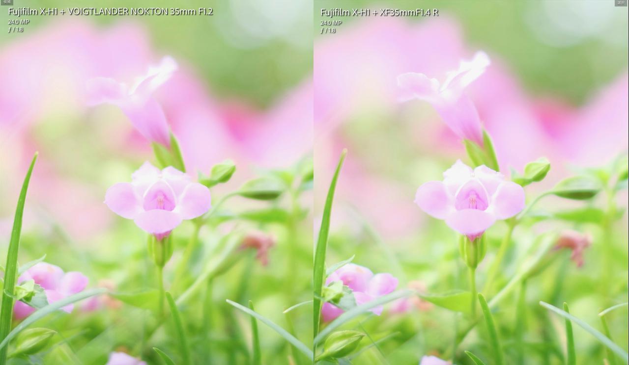 画像: 至近側F1.8での比較。着目点は中央部の花と右下の草の収差ですが、ここは微妙だなぁ。