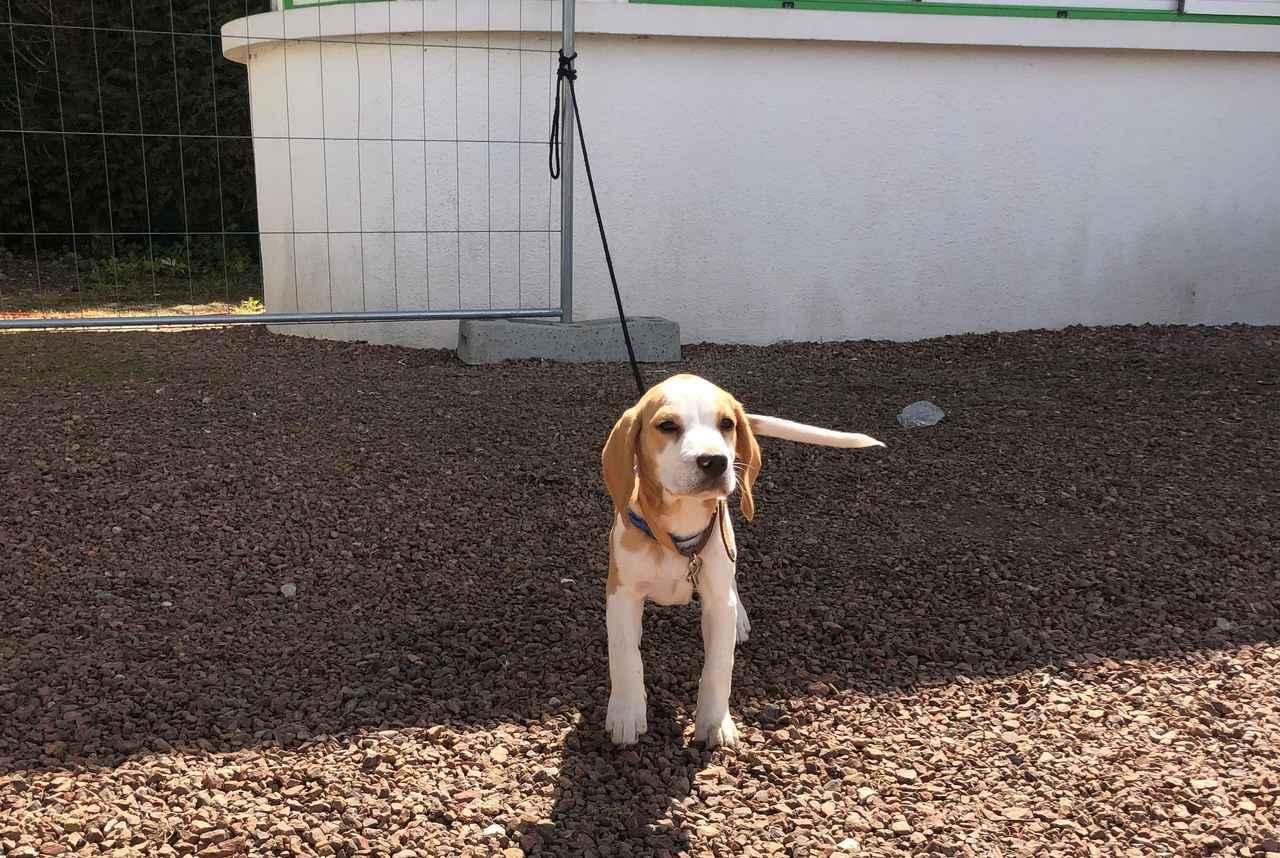 画像: ルトゥケの会場にいた犬。でも和やかな雰囲気はピッチ外だけ(写真◎日々野真理)