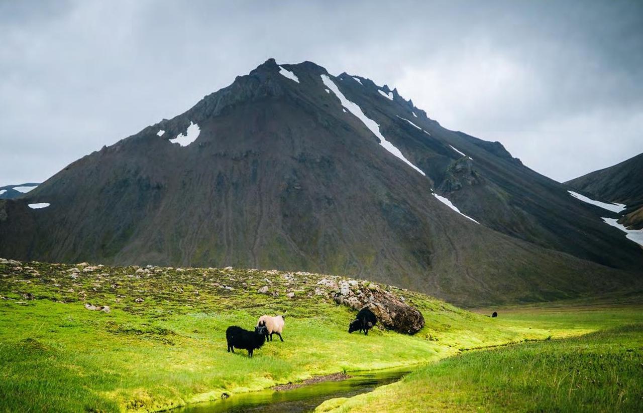 画像: アイスランド・グリーンランド・フェロー諸島 特産品市場 by Icelandair Japan/Viking Inc,