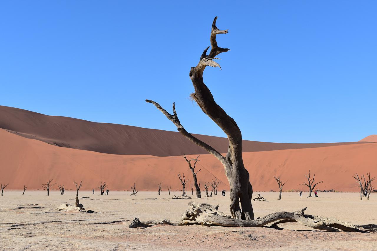 画像: ナミブ砂漠(ナミビア共和国)登録基準(ⅶ)(ⅷ)(ⅸ)(ⅹ) ©️クラブツーリズムスタッフ撮影
