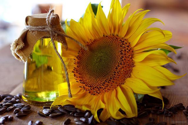 画像: ひまわり油(イメージ)