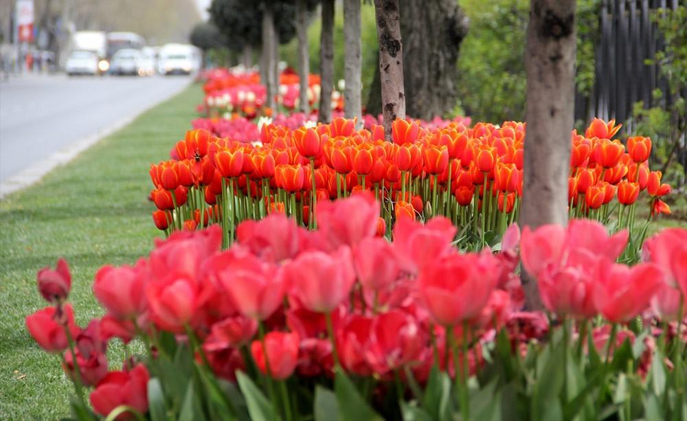 画像: イスタンブールに咲くチューリップ