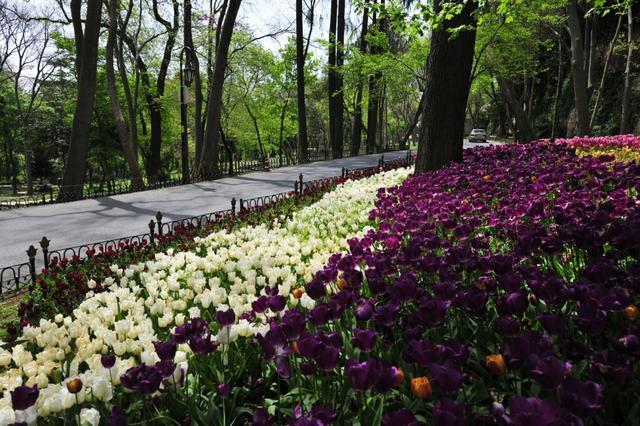 画像: エミルギャン公園(イメージ)