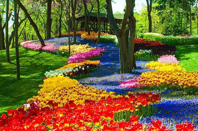 画像: エミルギャン公園のチューリップ(イメージ)