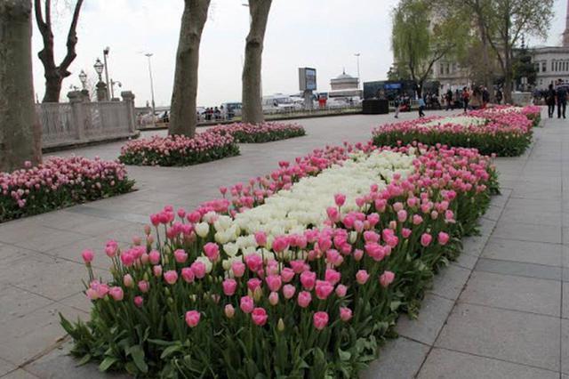 画像3: 花カレンダー2021<4月1回目>『春の訪れを祝うチューリップ/トルコ・オランダ』【好奇心で旅する海外】<花咲くワールド>