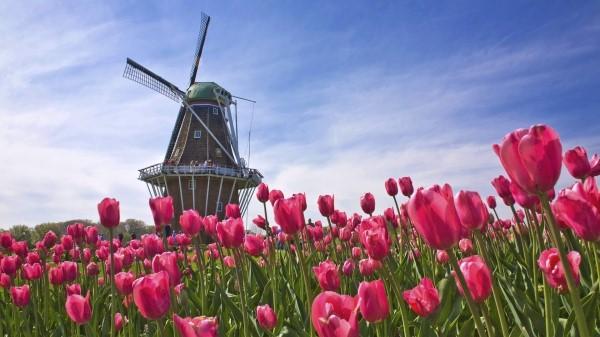 画像4: 花カレンダー2021<4月>『春の訪れを祝うチューリップ/トルコ・オランダ』【好奇心で旅する海外】<花咲くワールド>