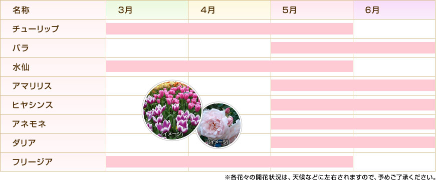 画像: キューケンホフ公園で見られる花のカレンダー(一例)