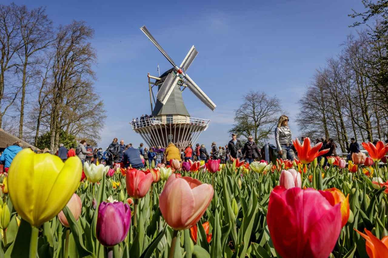 画像: 園内の風車 ⒸKeukenhof
