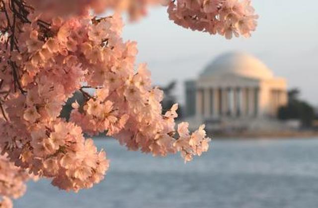 画像: ダイタル池と桜の風景 www.nationalcherryblossomfestival.org