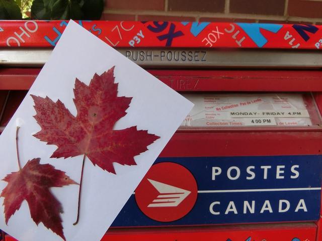 画像: 9月出発は、ご自身で拾った紅葉の葉っぱを押し花風にハガキにできる「とじこめーる」をお一人様1枚プレゼント!