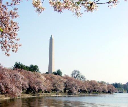 画像: 羽田空港発着・デルタ航空利用】桜舞うワシントンと夢を叶えるニューヨーク 6日間|クラブツーリズム