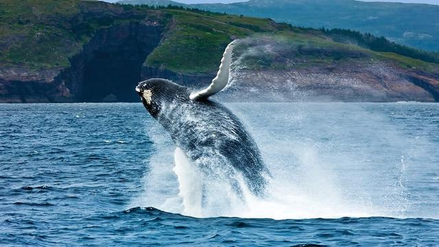画像: ©Newfoundland and Labrador Tourism