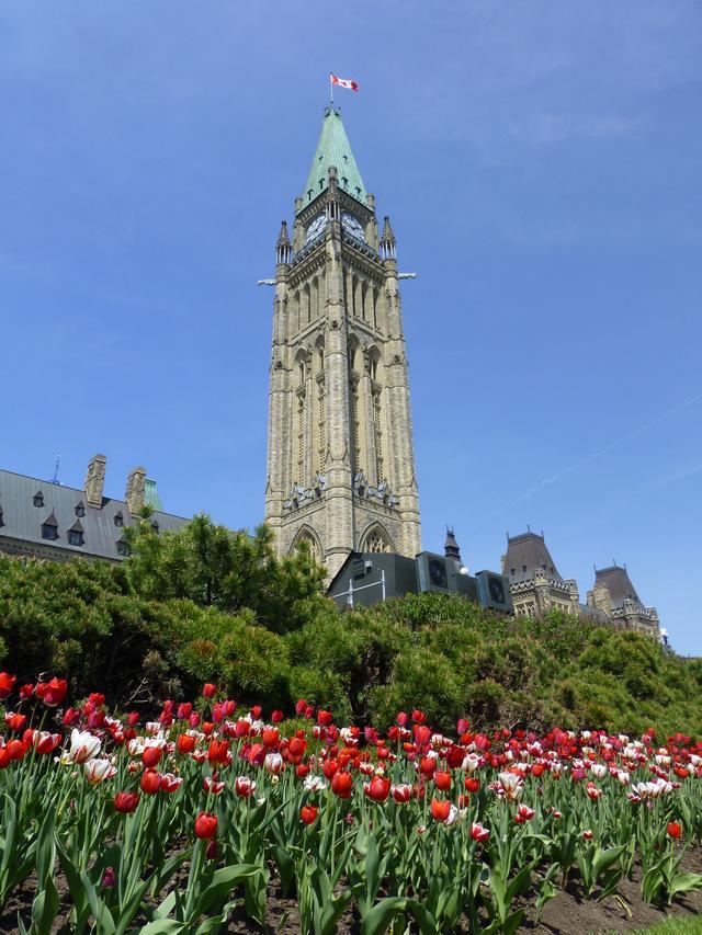 画像: 国会議事堂とチューリップ