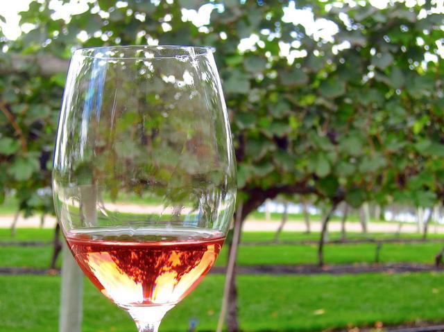 画像: オーガニックワインの産地 カナダ・オカナガン地方のワイナリーめぐり6日間|クラブツーリズム